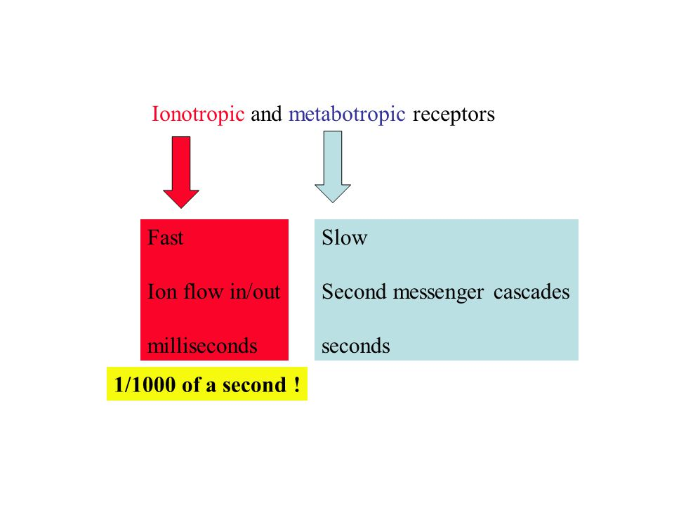 Ionotropic and metabotropic receptors