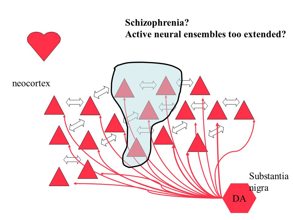 Schizophrenia Active neural ensembles too extended neocortex DA Substantia nigra