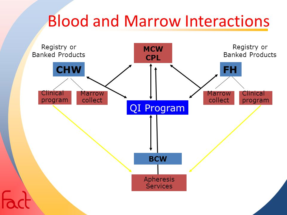 Blood and Marrow Interactions