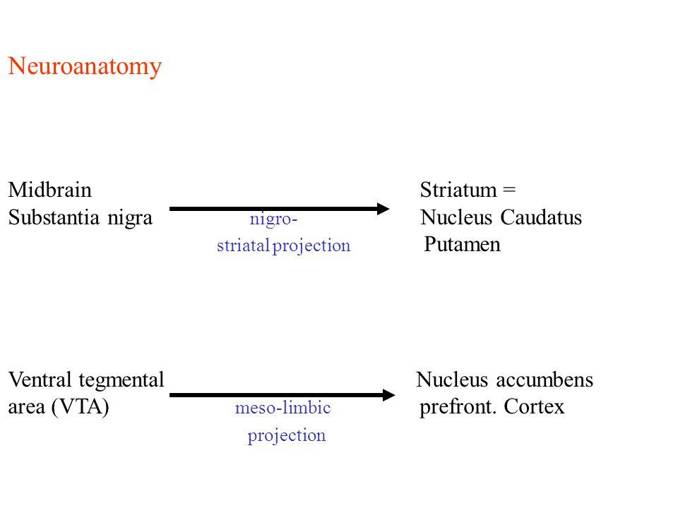 Neuroanatomy Midbrain Striatum =