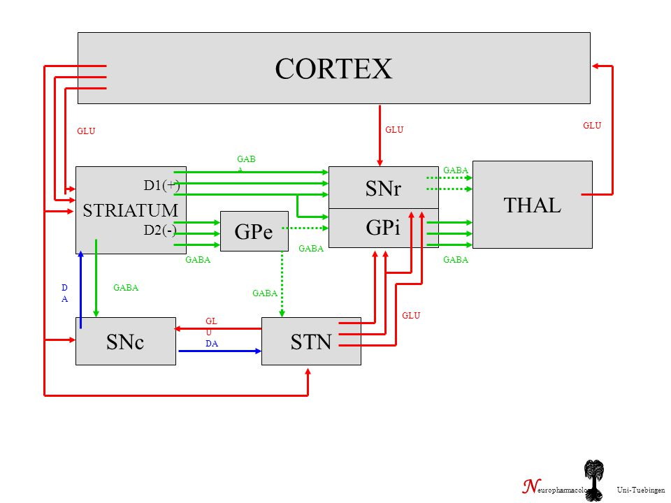 CORTEX GPe GPi SNr THAL SNc STN Neuropharmacology Uni-Tuebingen