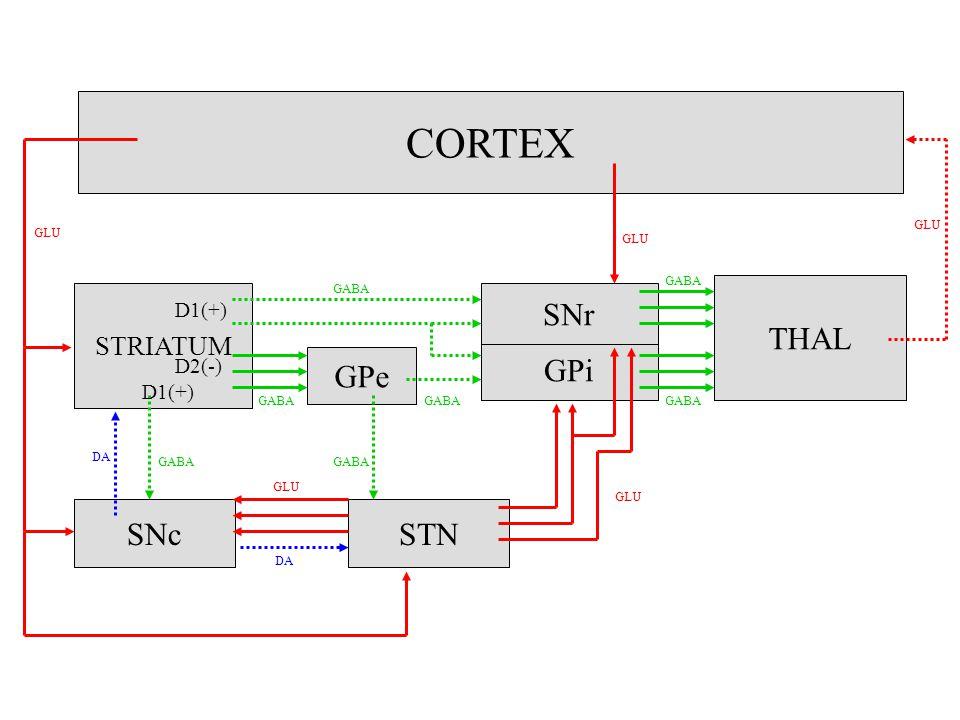 CORTEX THAL SNr GPi GPe SNc STN STRIATUM D1(+) D2(-) D1(+) GLU GLU GLU