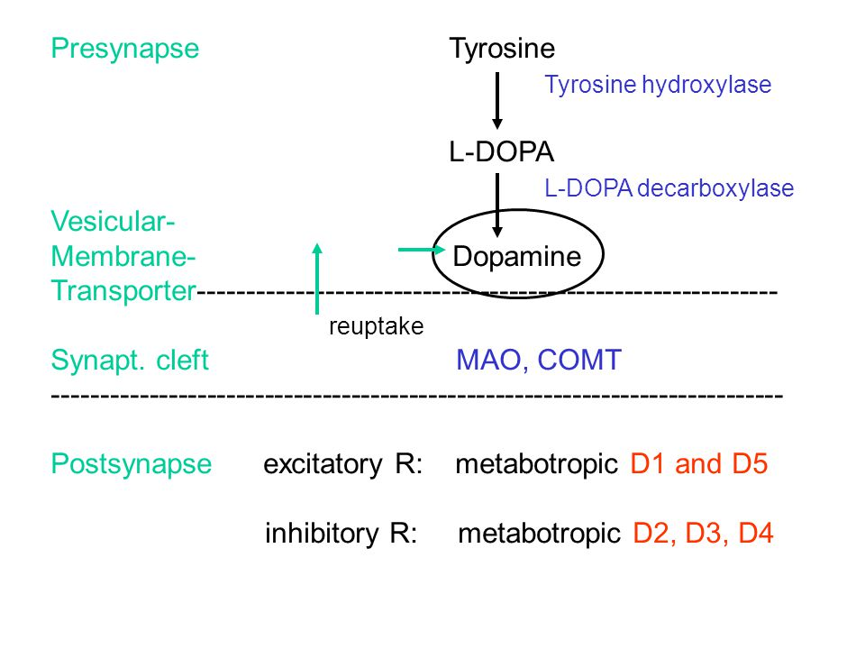 Postsynapse excitatory R: metabotropic D1 and D5