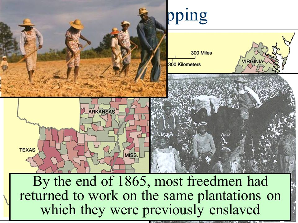 Sharecropping By the end of 1865, most freedmen had returned to work on the same plantations on which they were previously enslaved.