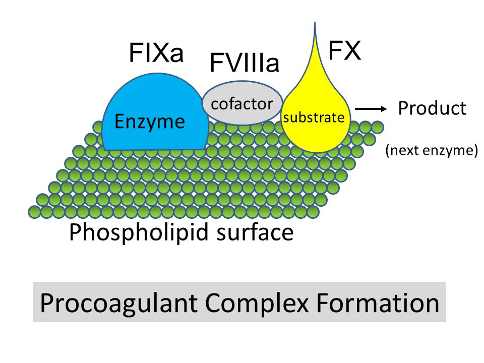 Procoagulant Complex Formation