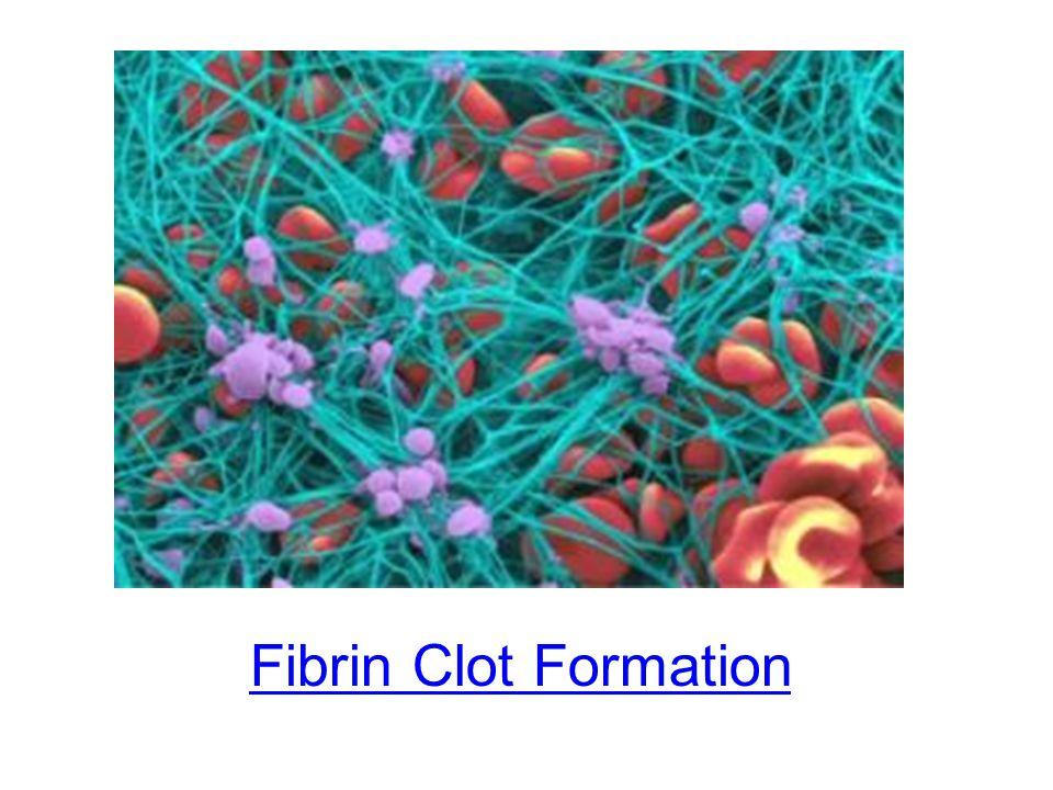 Fibrin Clot Formation