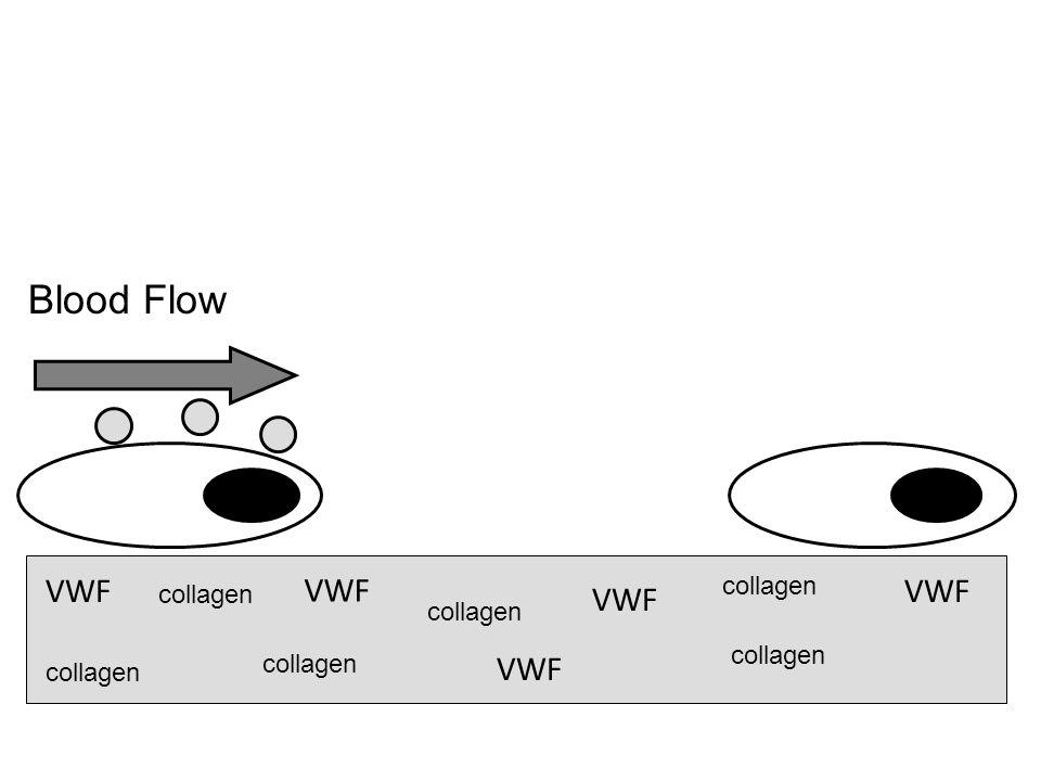 Blood Flow VWF VWF VWF VWF VWF collagen collagen collagen collagen