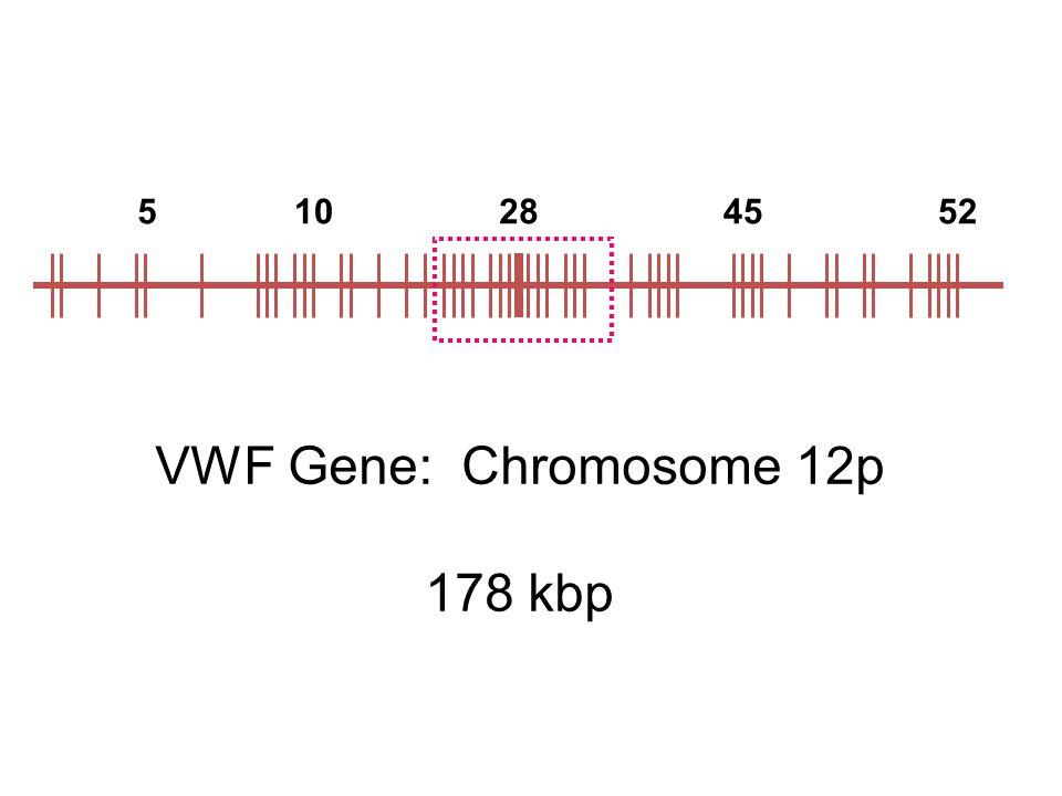 5 10 28 45 52 VWF Gene: Chromosome 12p 178 kbp