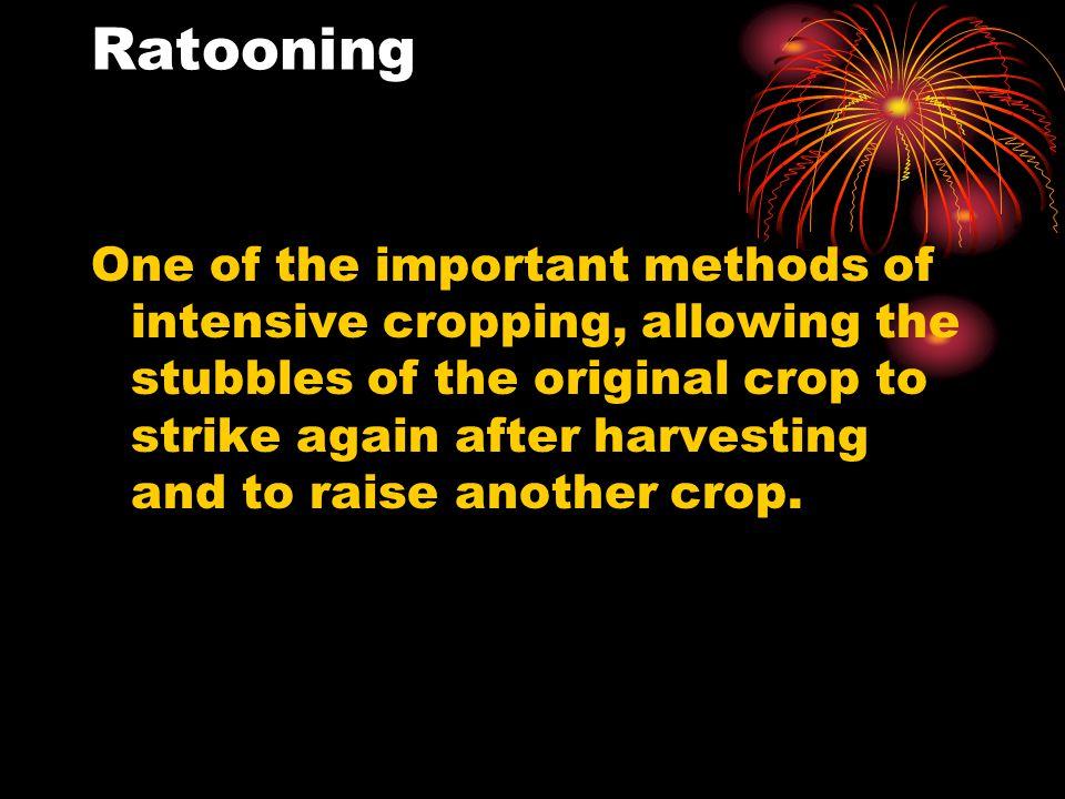 Ratooning