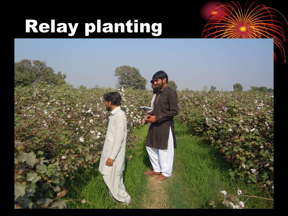 Relay planting