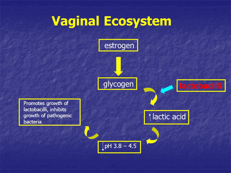 Vaginal Ecosystem estrogen glycogen lactobacilli lactic acid