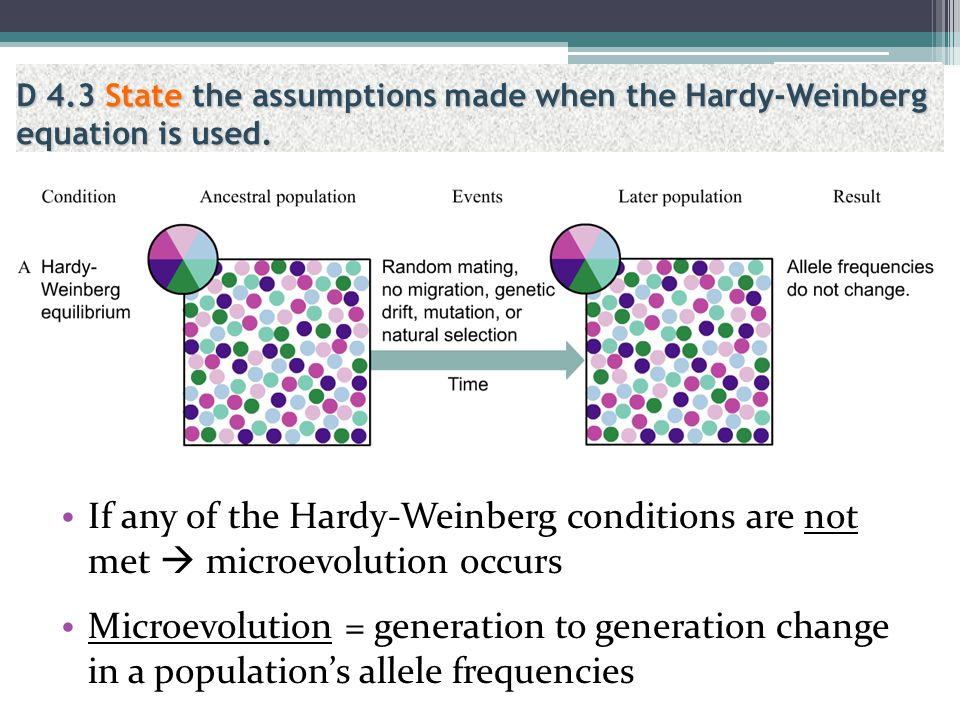 D 4.3 State the assumptions made when the Hardy-Weinberg equation is used.