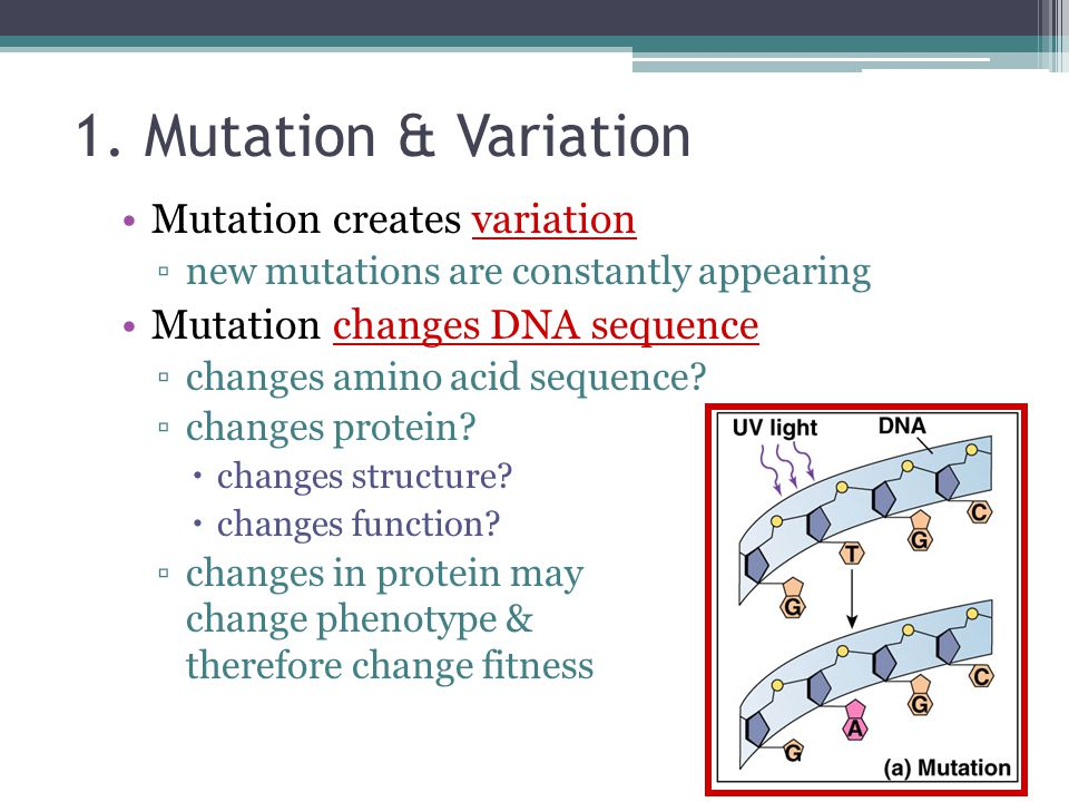 Not every mutation has a visible effect.