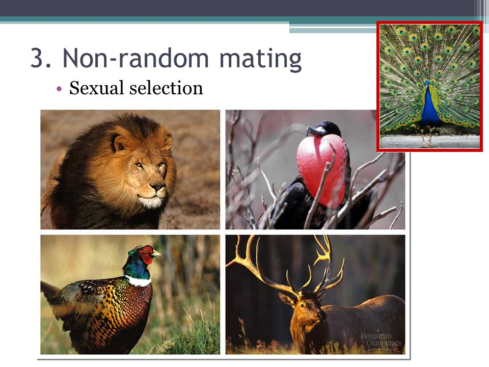 3. Non-random mating Sexual selection
