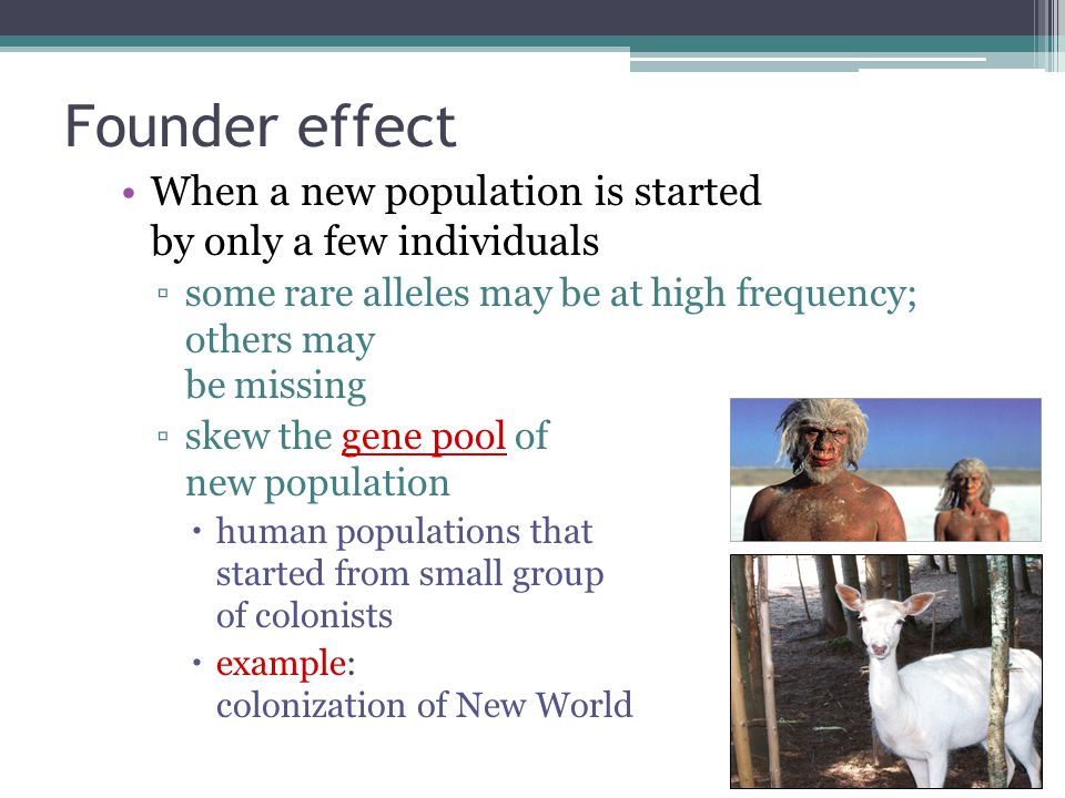 Founder effect When a new population is started by only a few individuals. some rare alleles may be at high frequency; others may be missing.