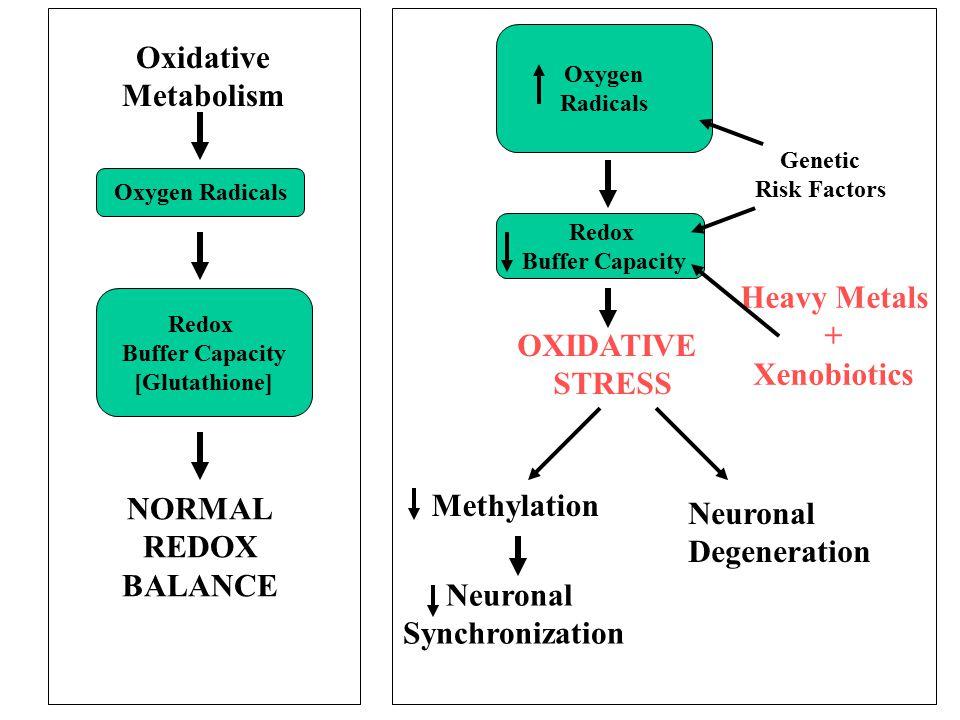 Oxidative Metabolism Heavy Metals + Xenobiotics OXIDATIVE STRESS