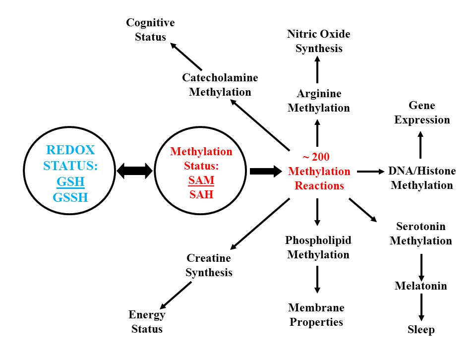 REDOX STATUS: GSH GSSH Cognitive Status Nitric Oxide Synthesis
