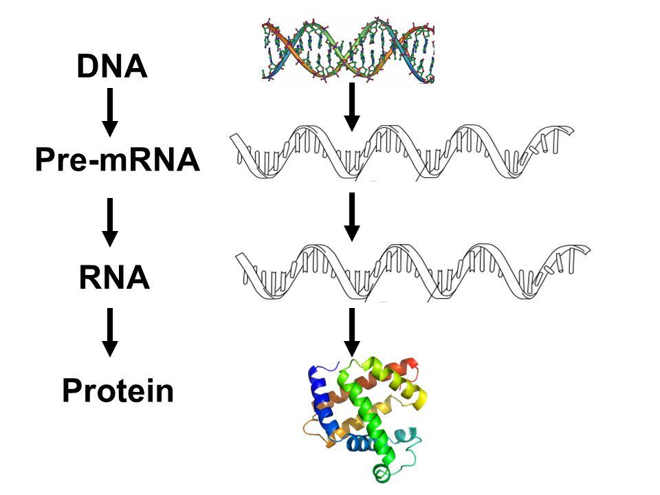 DNA Pre-mRNA RNA Protein