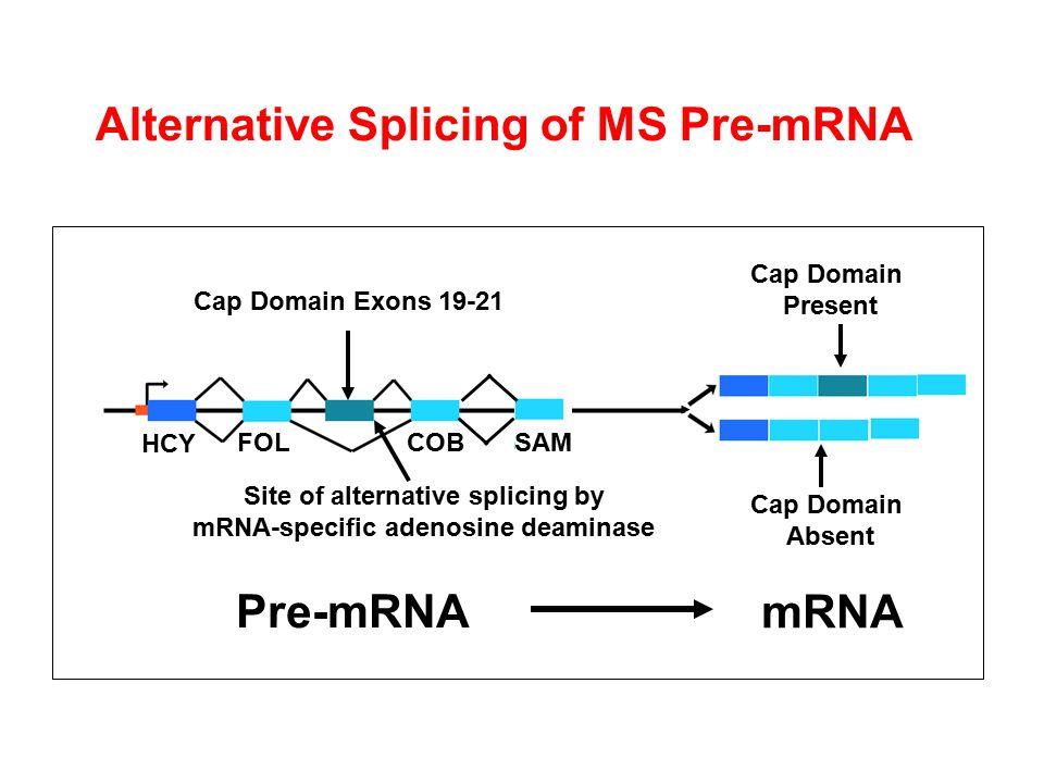 Site of alternative splicing by mRNA-specific adenosine deaminase