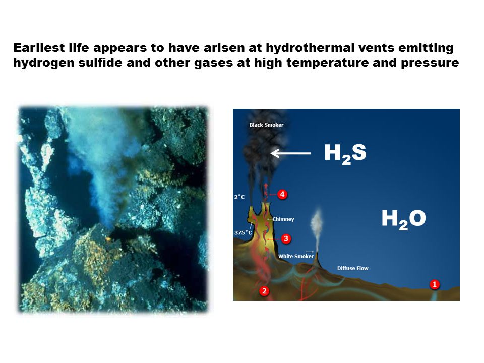 Earliest life appears to have arisen at hydrothermal vents emitting