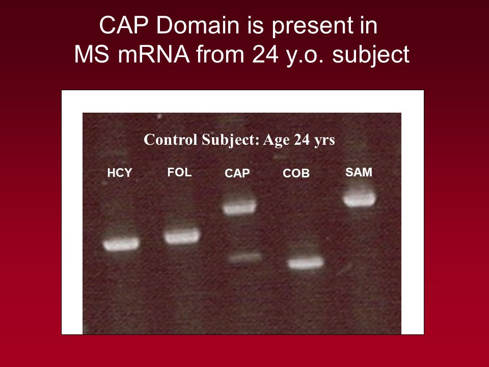 CAP Domain is present in MS mRNA from 24 y.o. subject