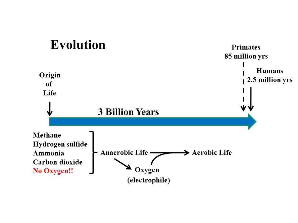 Evolution 3 Billion Years Primates 85 million yrs Humans