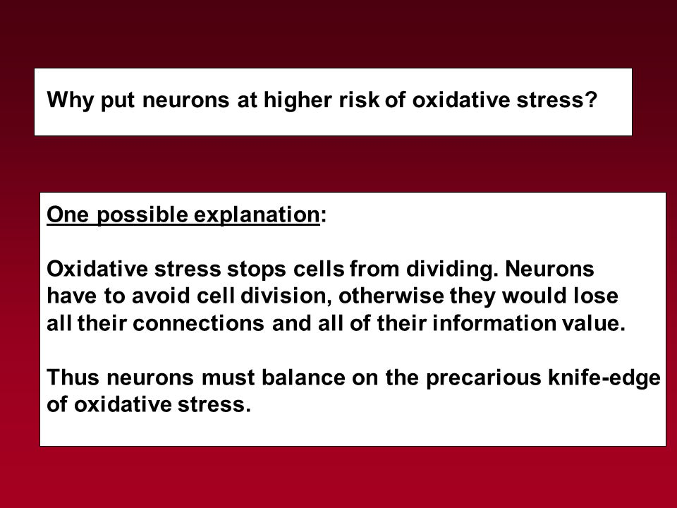 Why put neurons at higher risk of oxidative stress