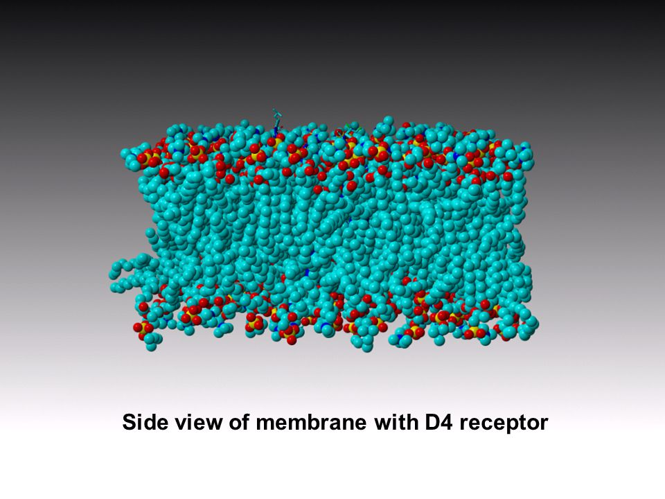 Side view of membrane with D4 receptor