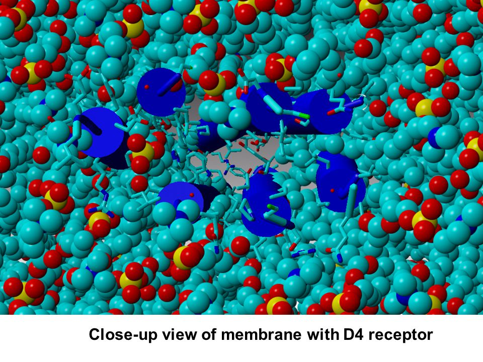 Close-up view of membrane with D4 receptor