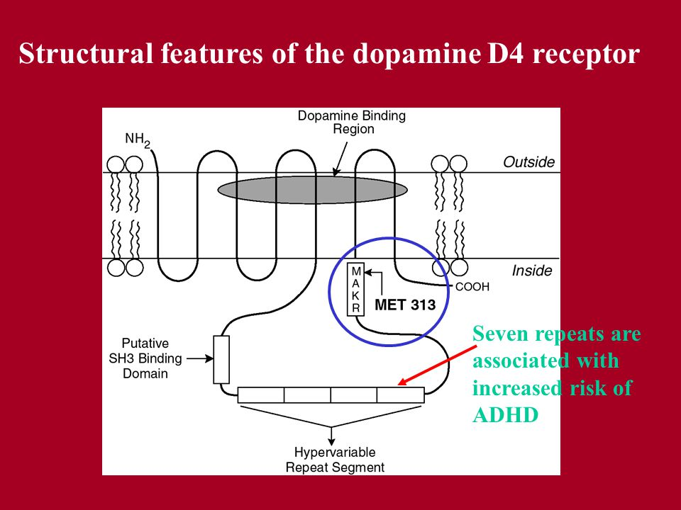Structural features of the dopamine D4 receptor