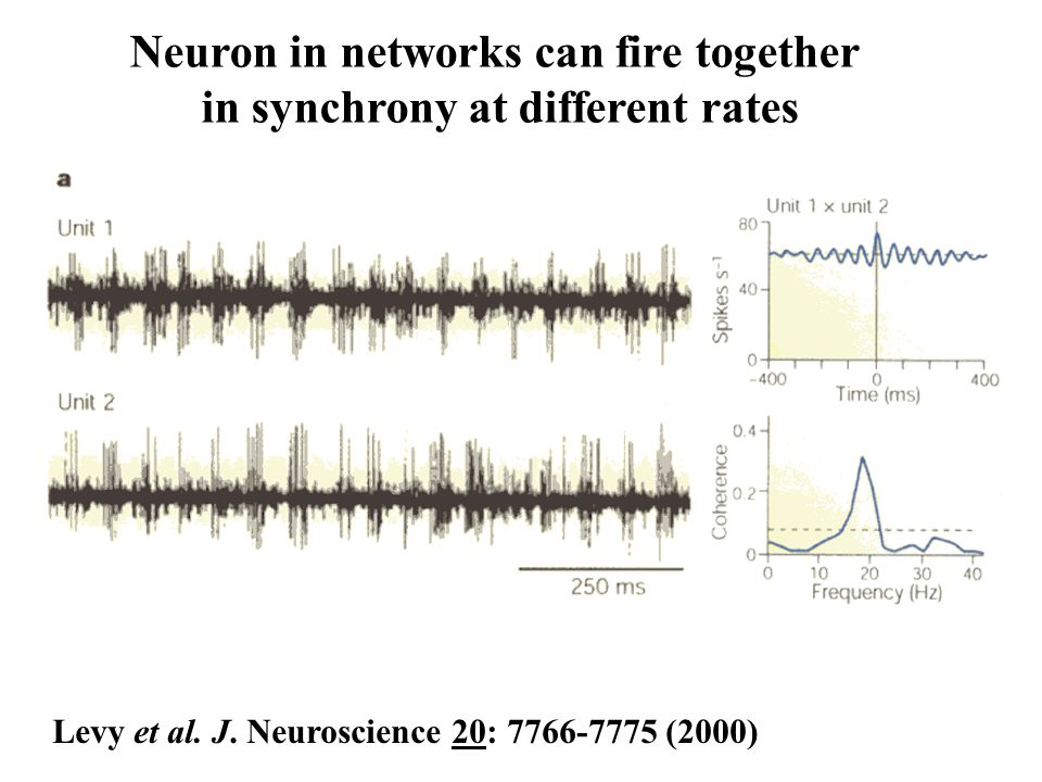 Neuron in networks can fire together in synchrony at different rates