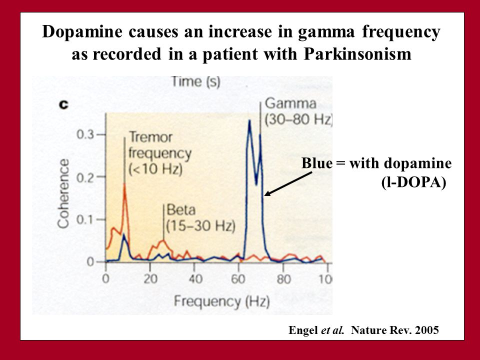 Dopamine causes an increase in gamma frequency