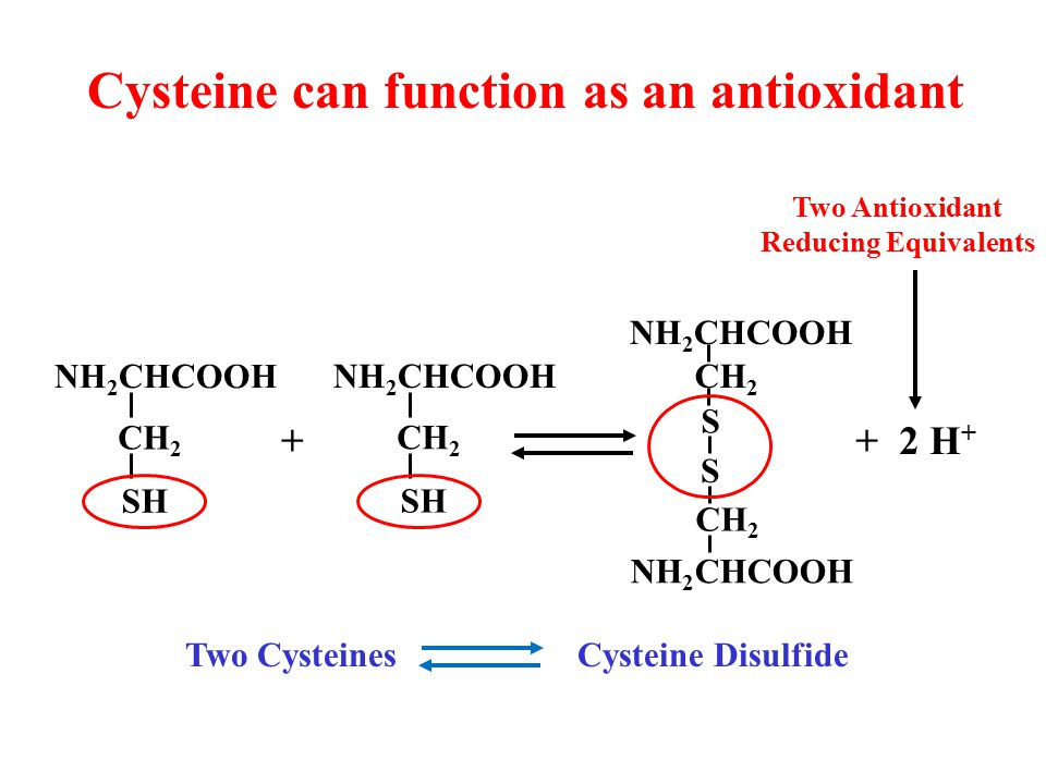 Cysteine can function as an antioxidant