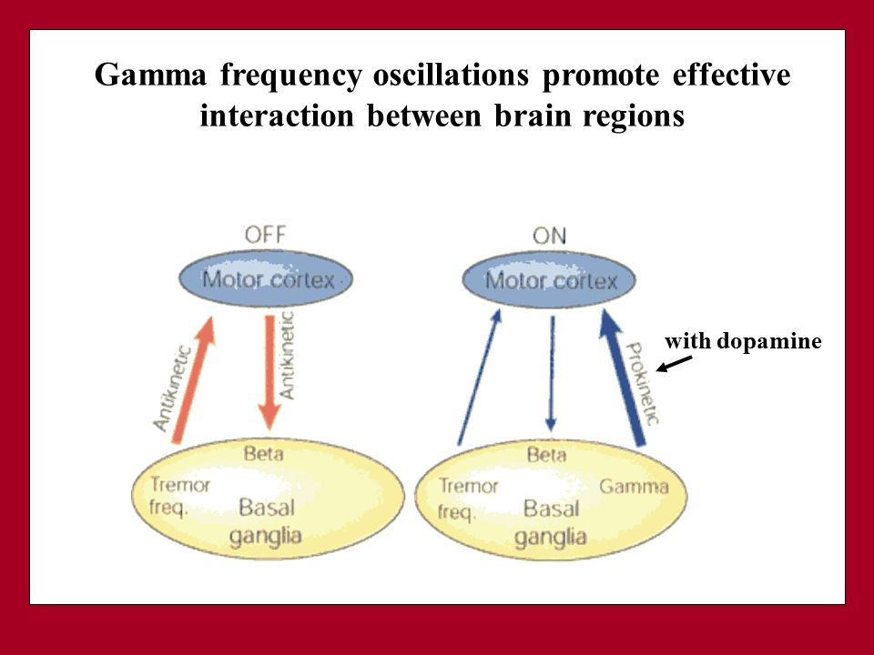 Gamma frequency oscillations promote effective