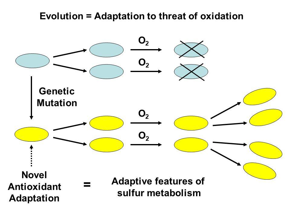 = Evolution = Adaptation to threat of oxidation O2 O2 Genetic Mutation