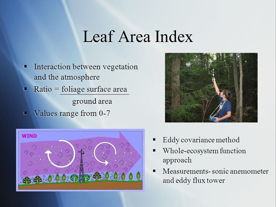 Leaf Area Index Interaction between vegetation and the atmosphere