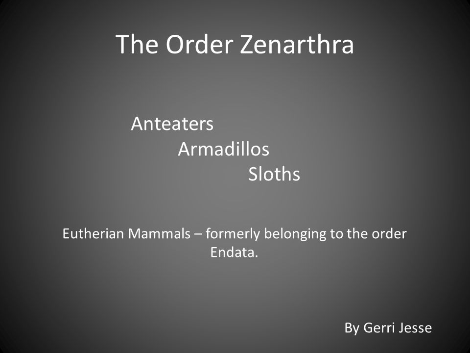 Eutherian Mammals – formerly belonging to the order Endata.