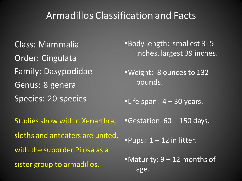 Armadillos Classification and Facts
