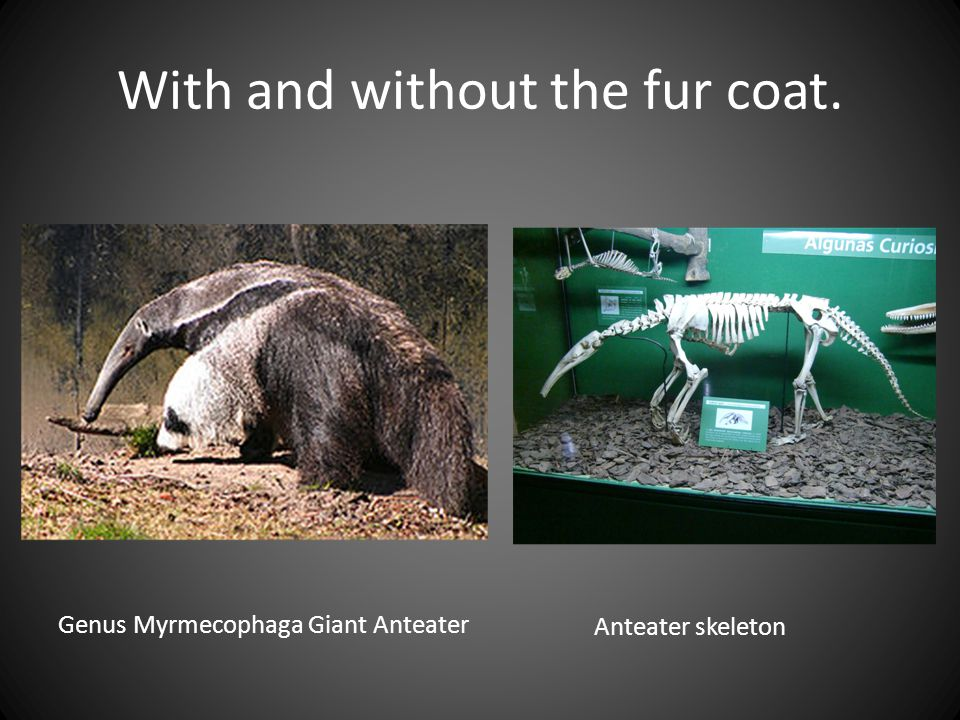 With and without the fur coat.