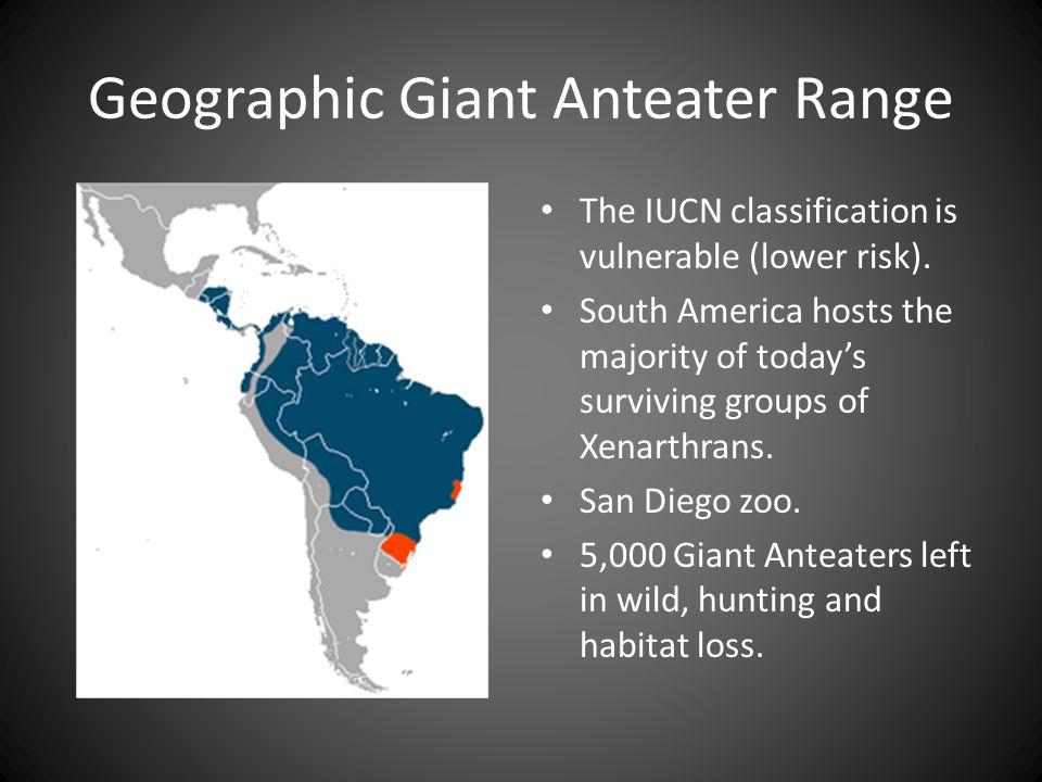 Geographic Giant Anteater Range