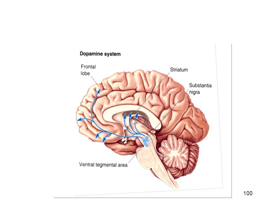 Dopamine pathways in human brain