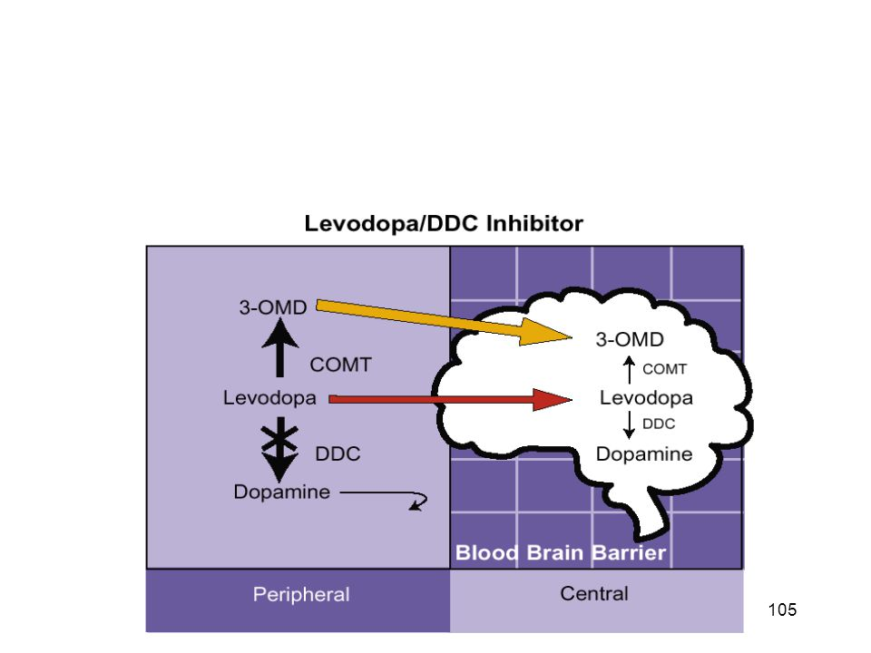 Inhibition of peripheral COMT by entacapone increases the amount of L-DOPA and dopamine in the brain and improves the alleviation of PD symptoms.