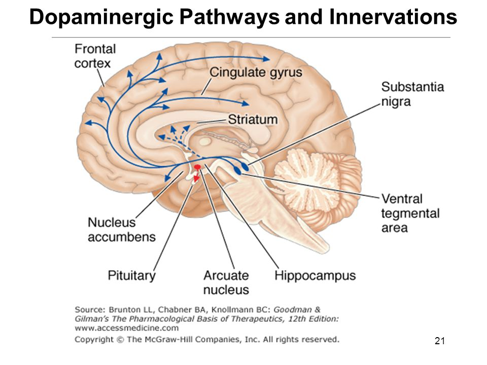 Dopaminergic Pathways and Innervations