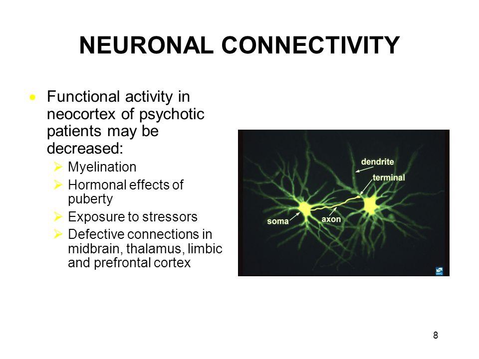 NEURONAL CONNECTIVITY