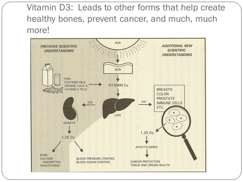 Vitamin D3: Leads to other forms that help create healthy bones, prevent cancer, and much, much more!
