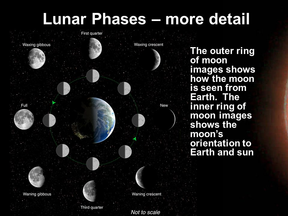Lunar Phases – more detail