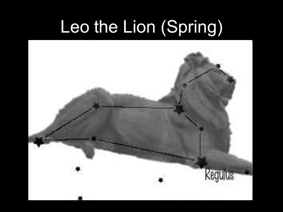 Leo the Lion (Spring)