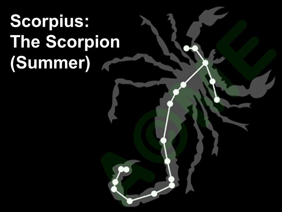 Scorpius: The Scorpion (Summer)