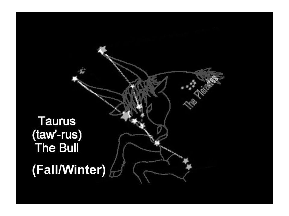 Taurus (the Bull) (Fall/Winter)