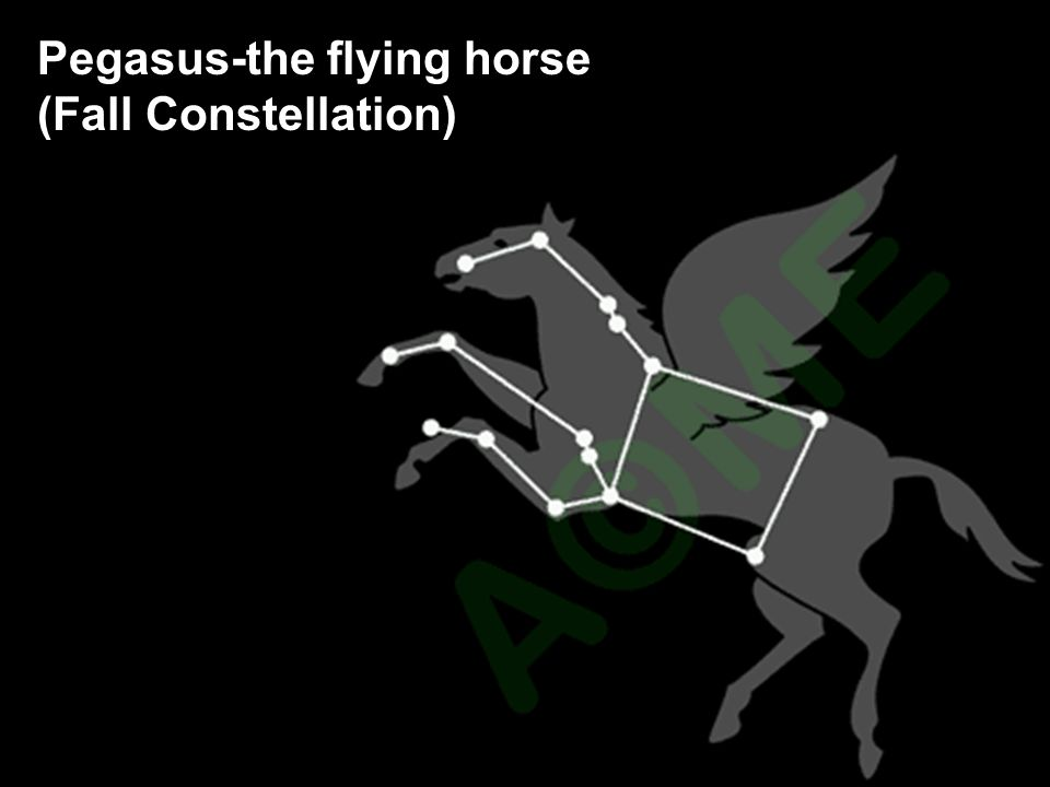 Pegasus-the flying horse
